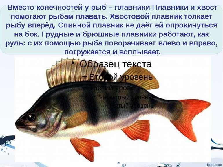 Тело рыбы покрыто ЧЕШУЕЙ