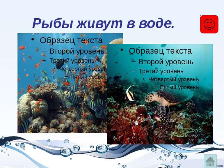 Рыбы имеют плавники.