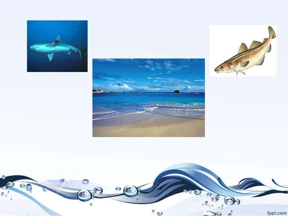 Проверь себя! Живут в море: 1. Треска 2 Акула. Живут в реке или в пруду: 6. Л...
