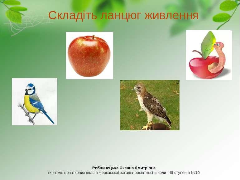 Складіть ланцюг живлення Рибчинецька Оксана Дмитрівна вчитель початкових клас...