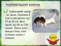 Найменший хижак - це ласка. Довжина її тіла в середньому від 13 до 26 см. Ваг...