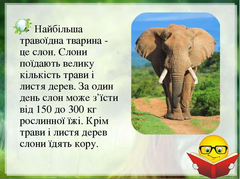 Найбільша травоїдна тварина - це слон. Слони поїдають велику кількість трави ...
