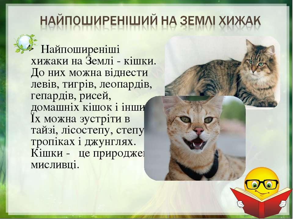 Найпоширеніші хижаки на Землі - кішки. До них можна віднести левів, тигрів, л...