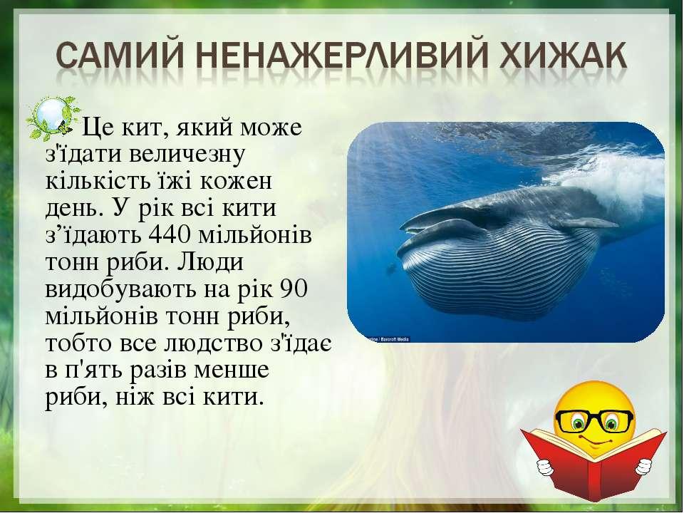 Це кит, який може з'їдати величезну кількість їжі кожен день. У рік всі кити ...