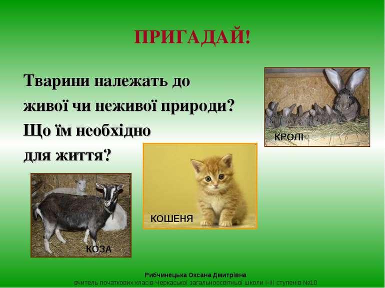 Тварини належать до живої чи неживої природи? Що їм необхідно для життя? ПРИГ...
