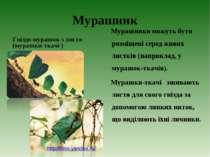 Мурашник Гніздо мурашок з листя (мурашки-ткачі ) Мурашники можуть бути розміщ...