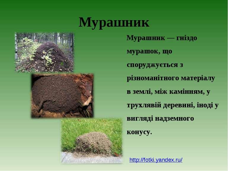 Мурашник Мурашник — гніздо мурашок, що споруджується з різноманітного матеріа...