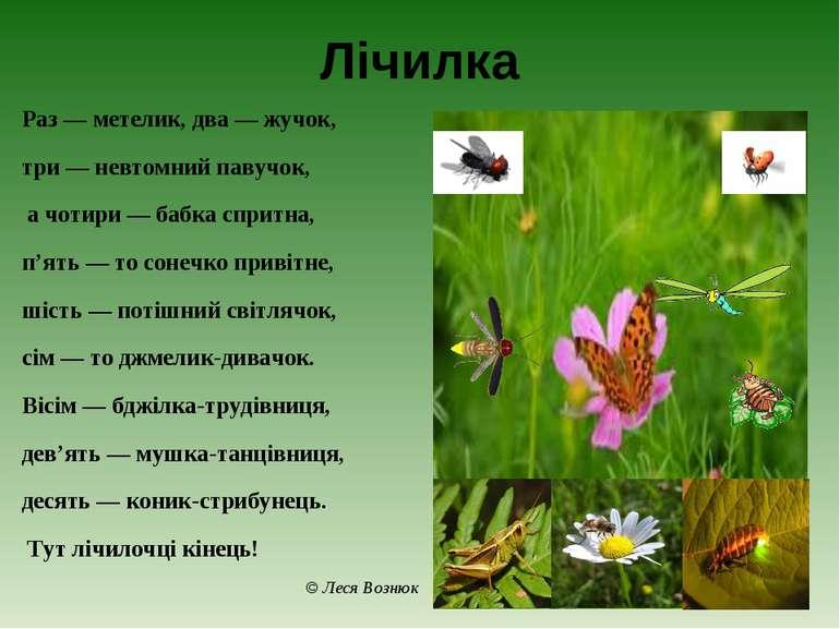 Лічилка Раз — метелик, два — жучок, три — невтомний павучок, а чотири — бабка...