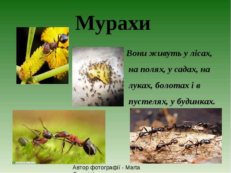 Мурахи Вони живуть у лісах, на полях, у садах, на луках, болотах і в пустелях...