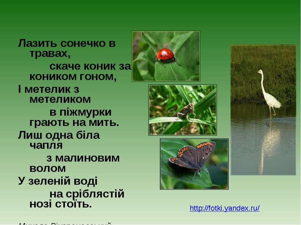 Лазить сонечко в травах, скаче коник за коником гоном, І метелик з метеликом ...