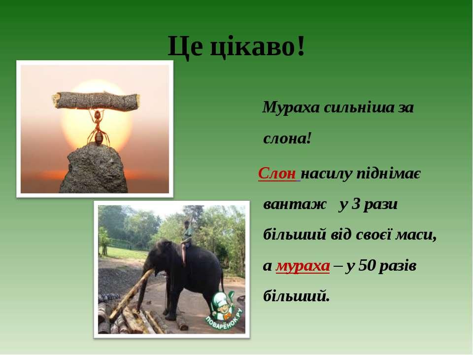 Це цікаво! Мураха сильніша за слона! Слон насилу піднімає вантаж у 3 рази біл...