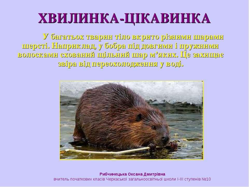 У багатьох тварин тіло вкрито різними шарами шерсті. Наприклад, у бобра під д...