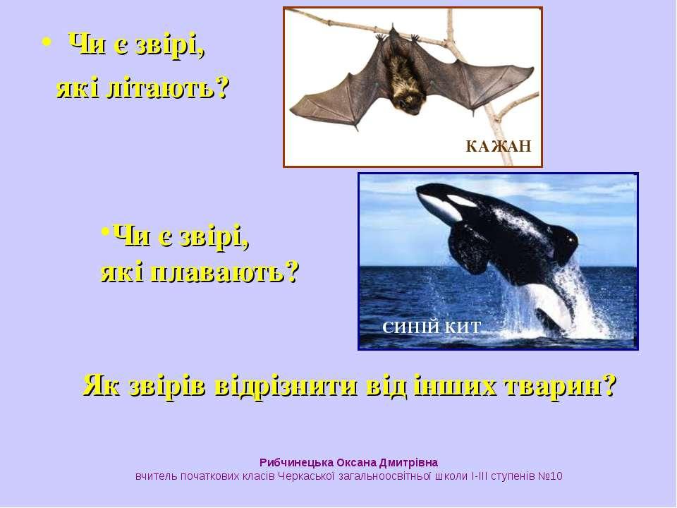 Чи є звірі, які літають? КАЖАН Чи є звірі, які плавають? СИНІЙ КИТ Як звірів ...