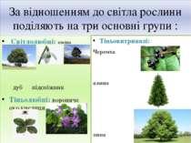 За відношенням до світла рослини поділяють на три основні групи : Світлолюбні...