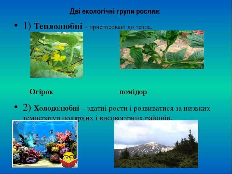 Дві екологічні групи рослин: 1) Теплолюбні – пристосовані до тепла. Огірок по...