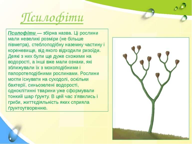 Псилофіти — збірна назва. Ці рослини мали невеликі розміри (не більше півметр...