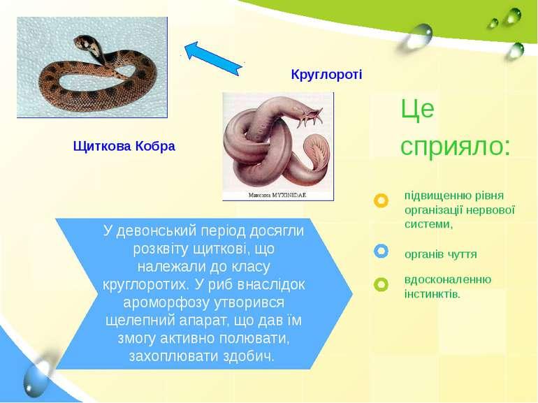 Круглороті Щиткова Кобра У девонський період досягли розквіту щиткові, що нал...