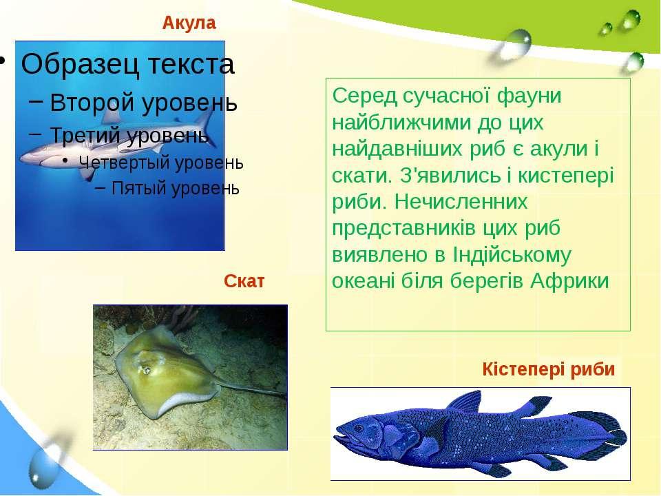 Акула Серед сучасної фауни найближчими до цих найдавніших риб є акули і скати...