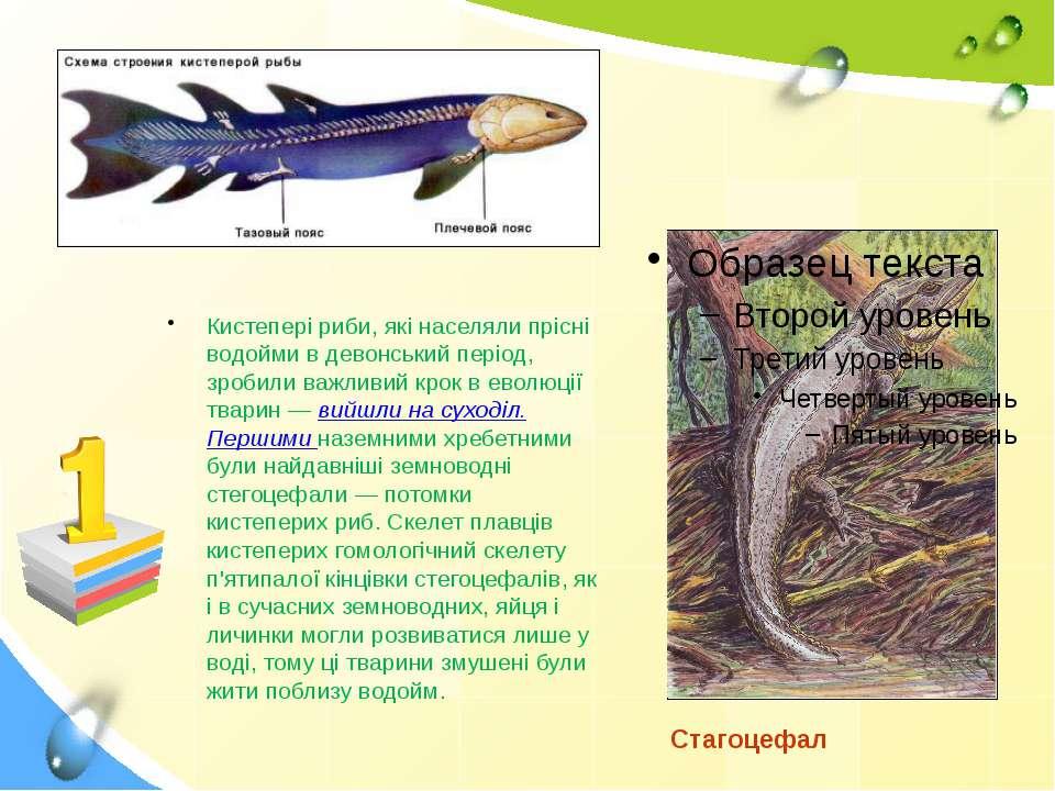 Кистепері риби, які населяли прісні водойми в девонський період, зробили важл...