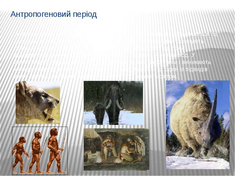 Антропогеновий період Антропогеновий період розпочався 1,8 млн. років тому і ...