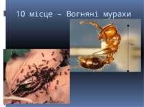 10 місце – Вогняні мурахи