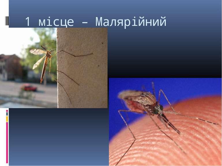 1 місце – Малярійний комар