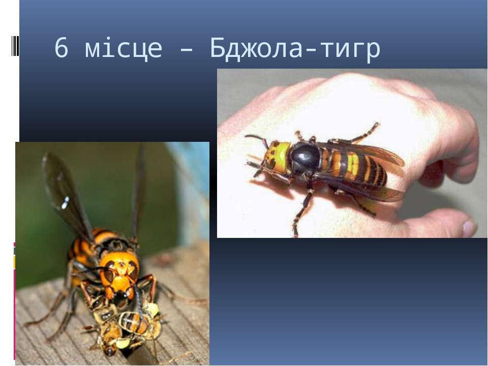 6 місце – Бджола-тигр