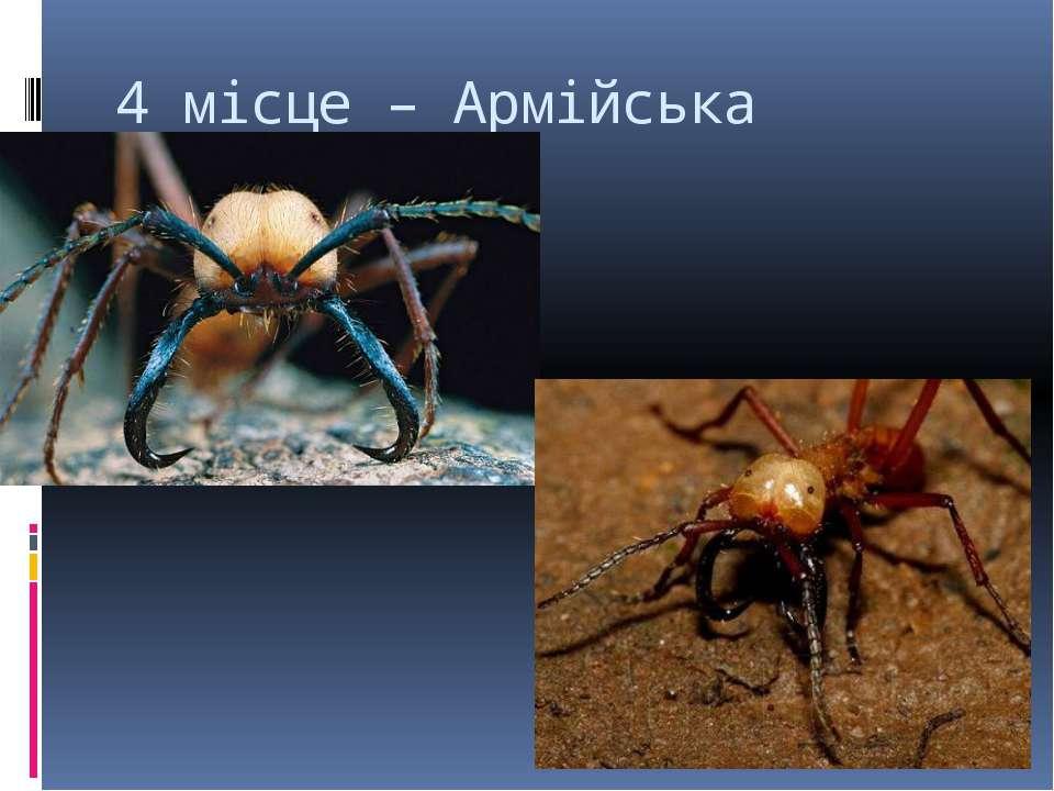 4 місце – Армійська мураха