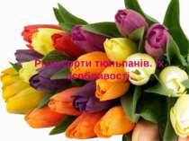 Різні сорти тюльпанів. Їх особливості.