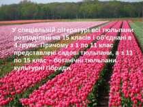 У спеціальній літературі всі тюльпани розподілені на 15 класів і об'єднані в ...