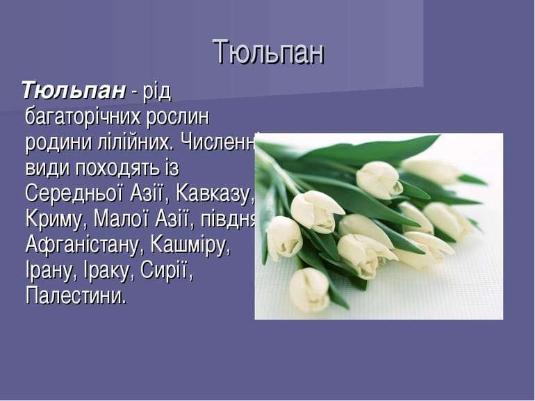 Тюльпан Тюльпан - рід багаторічних рослин родини лілійних. Численні види похо...