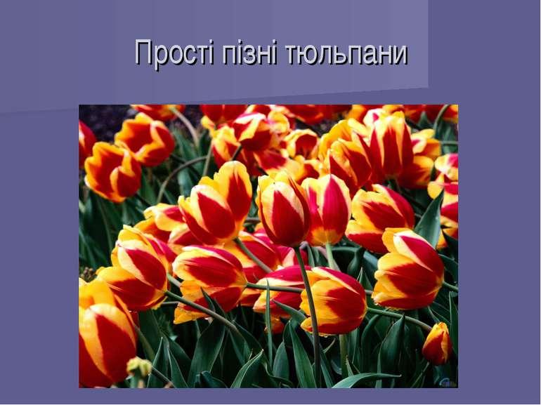 Прості пізні тюльпани