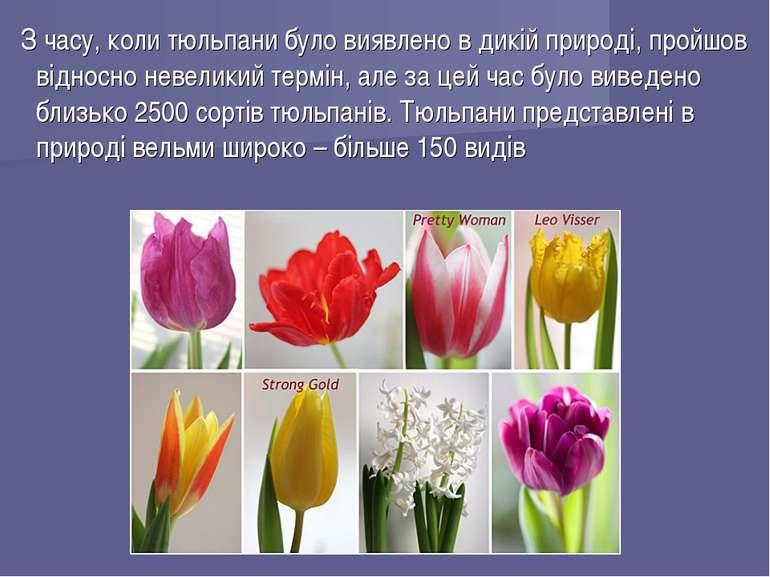 З часу, коли тюльпани було виявлено в дикій природі, пройшов відносно невелик...
