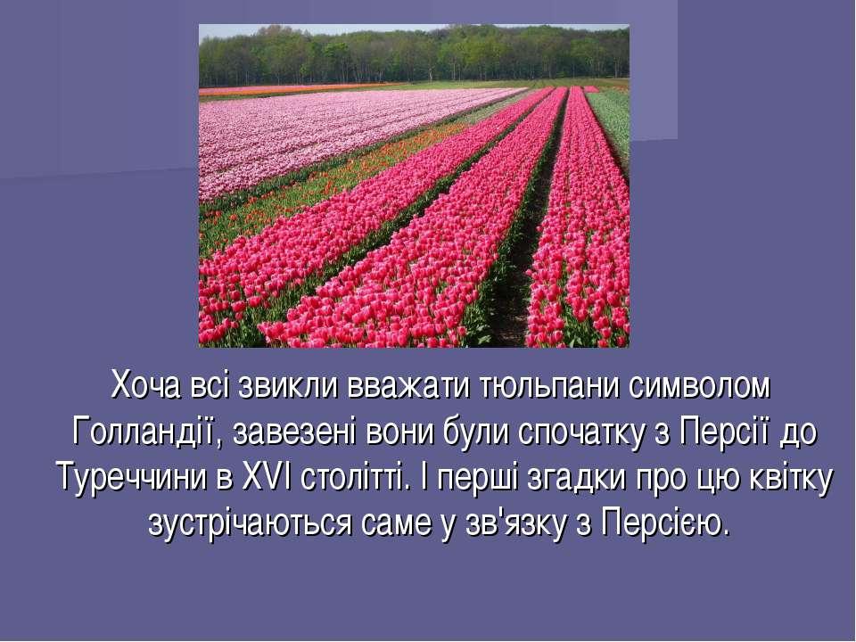 Хоча всі звикли вважати тюльпани символом Голландії, завезені вони були споча...
