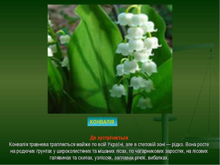 КОНВАЛІЯ Де зустрічається Конвалія травнева трапляється майже по всій Україні...