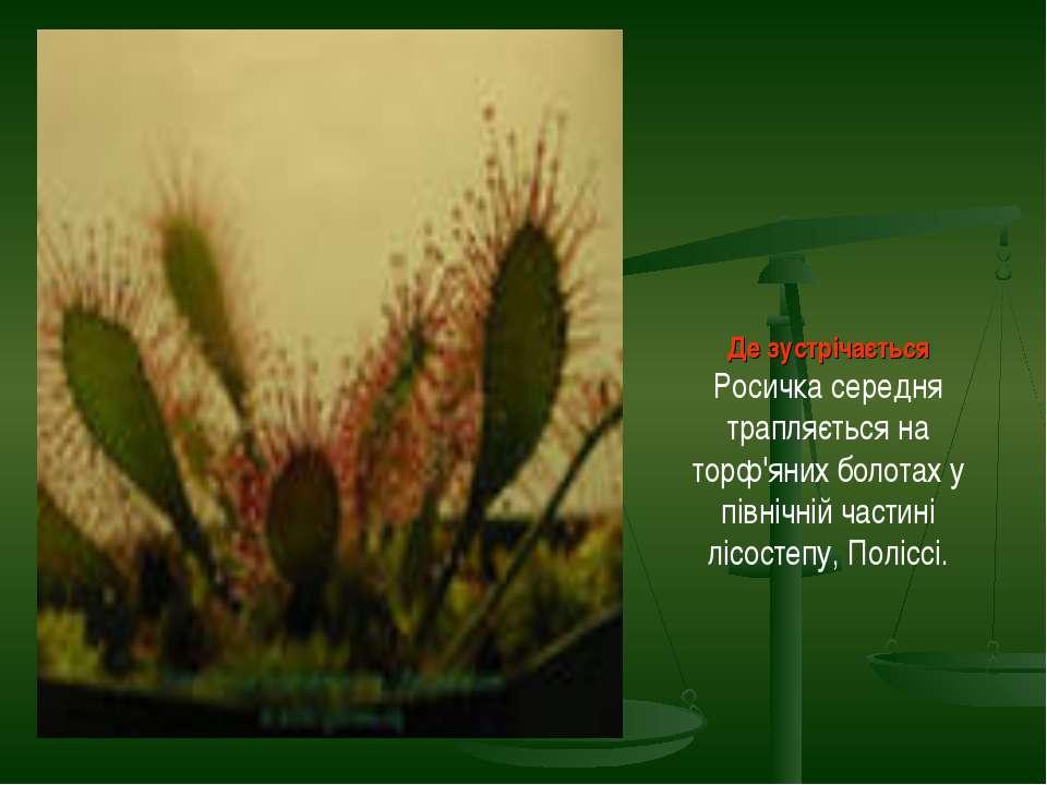 Де зустрічається Росичка середня трапляється на торф'яних болотах у північній...