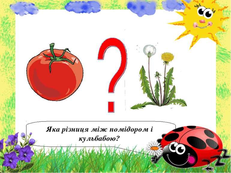 Яка різниця між помідором і кульбабою?