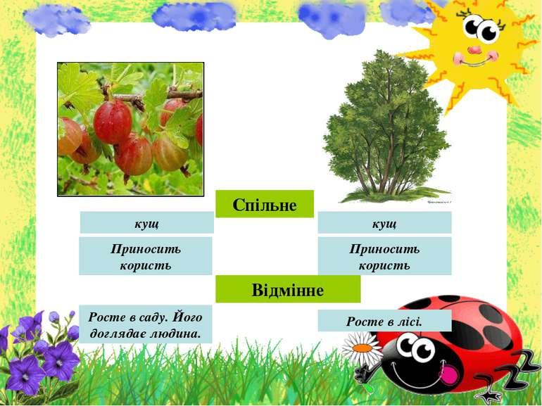 Спільне кущ кущ Приносить користь Приносить користь Відмінне Росте в саду. Йо...