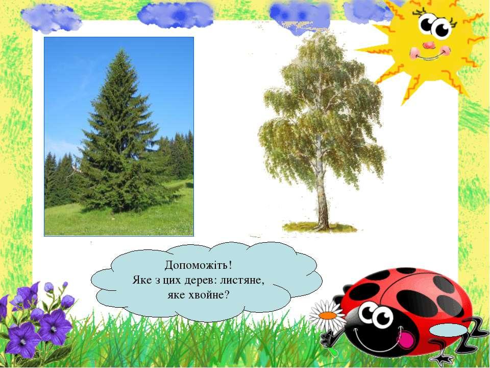 Допоможіть! Яке з цих дерев: листяне, яке хвойне?