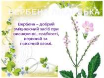 ВЕРБЕНА ЛІКАРСЬКА Вербена – добрий змiцнюючий засiб при виснаженнi, слабкостi...