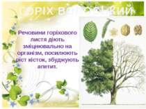 ГОРІХ ВОЛОСЬКИЙ Речовини гopiхового листя дiють змiцнювально на органiзм, пос...