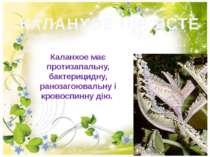 КАЛАНХОЕ ПІР'ЯСТЕ Каланхое має протизапальну, бактерицидну, ранозагоювальну і...