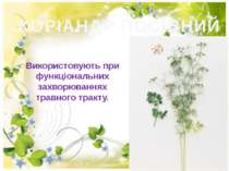 КОРІАНДР ПОСІВНИЙ Використовують при функцiональних захворюваннях травного тр...