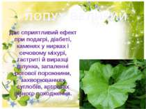 ЛОПУХ ВЕЛИКИЙ Дає сприятливий ефект при подагрi, дiабетi, каменях у нирках i ...