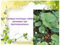 СУНИЦІ ЛІСОВІ Суниця поліпшує обмін речовин і діє протизапально.