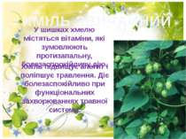 ХМІЛЬ ЗВИЧАЙНИЙ У шишках хмелю мiстяться вітаміни, які зумовлюють протизапаль...