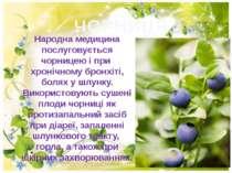 ЧОРНИЦЯ Народна медицина послуговується чорницею i при хронiчному бронхiтi, б...