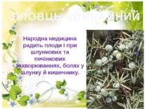 ЯЛОВЦЬ ЗВИЧАЙНИЙ Народна медицина радить плоди і при шлункових та печінкових ...