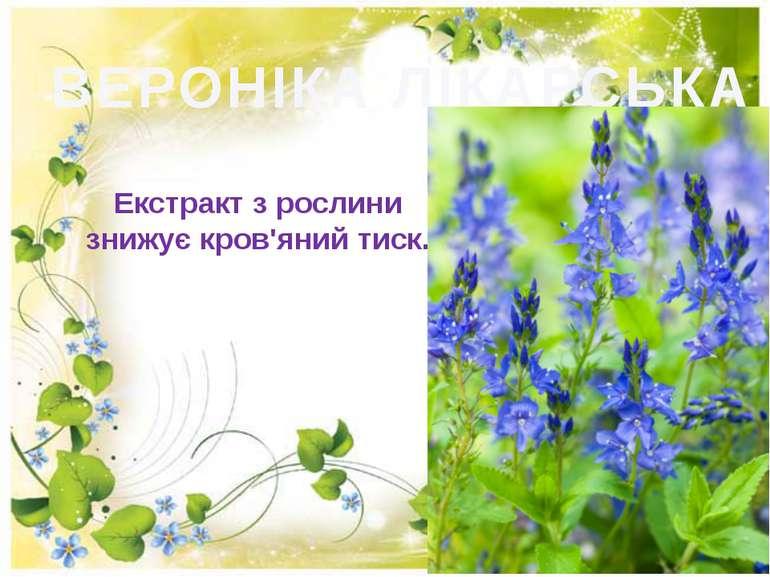 ВЕРОНІКА ЛІКАРСЬКА Екстракт з рослини знижує кров'яний тиск.