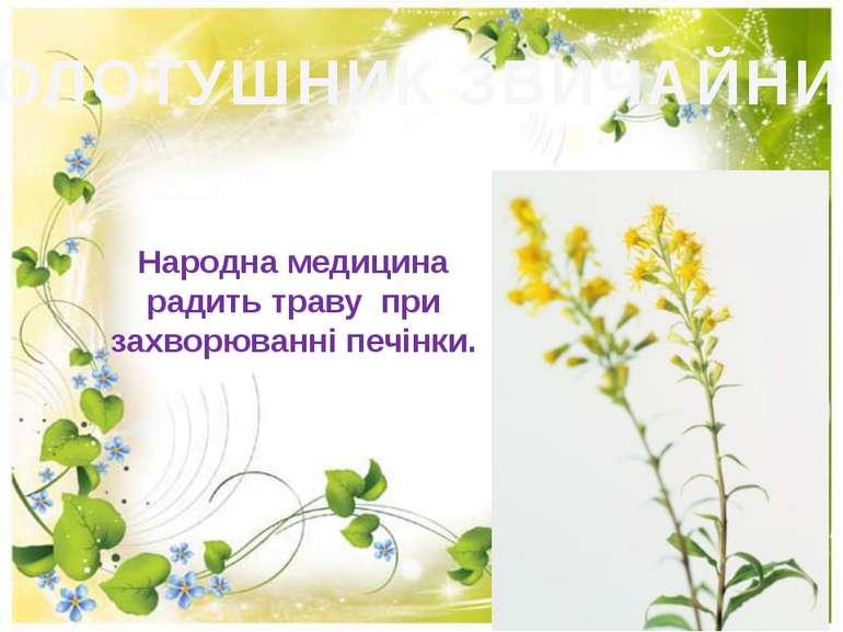 ЗОЛОТУШНИК ЗВИЧАЙНИЙ Народна медицина радить траву при захворюваннi печiнки.